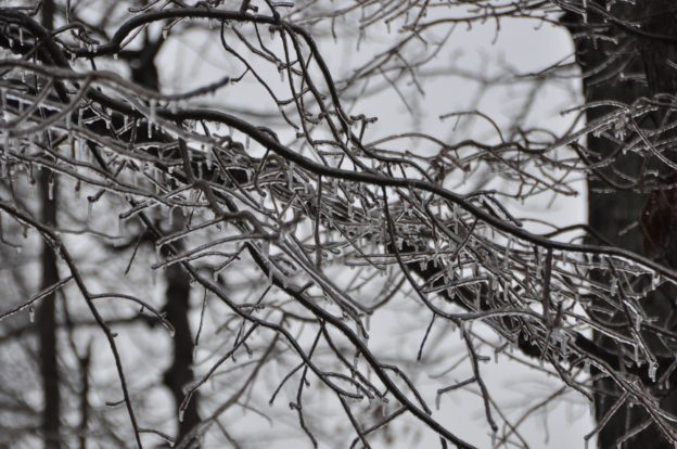 Ice buildup on trees