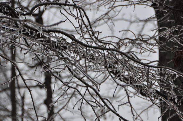 Ice buildup on trees